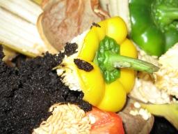 compost291.jpg