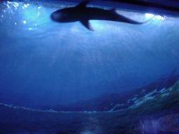 shark317.jpg
