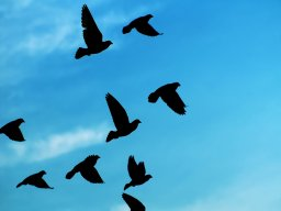 Tue_Romanow_birds563.jpg