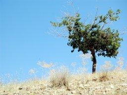 ehsan_namavar_tree608.jpg