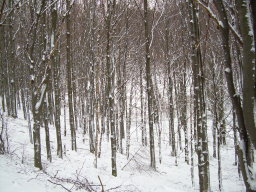 Kinga_Lipp_trees1140.jpg