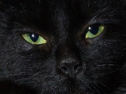 Mike_wade_cat1195.jpg