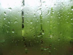 Tatyana_Postovyk_rain