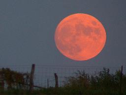 wikipedia.org_Harvest_moon